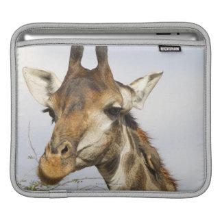 Giraffe, Kruger National Park, South Africa Sleeves For iPads