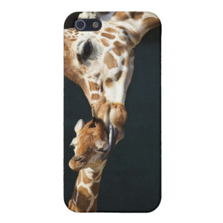 Giraffe Love iPhone 5 Cases