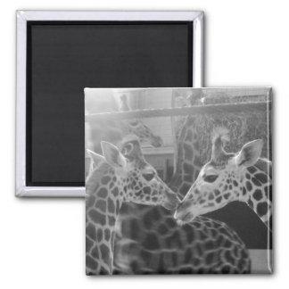 Giraffe Love Square Magnet