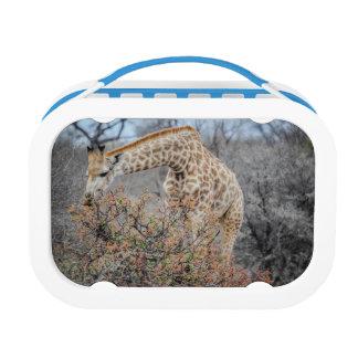 Giraffe Lunch Box