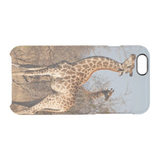 Giraffe Morning Snack Clear iPhone 6/6S Case