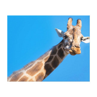 Giraffe neck and head stretched canvas print