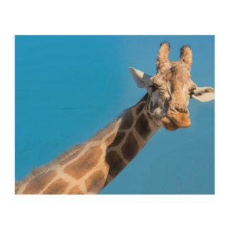 Giraffe neck and head wood print