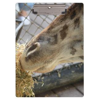 giraffe nose eating hay animal zoo image clipboard