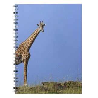 Giraffe, on ridge against blue sky, Giraffa Notebooks