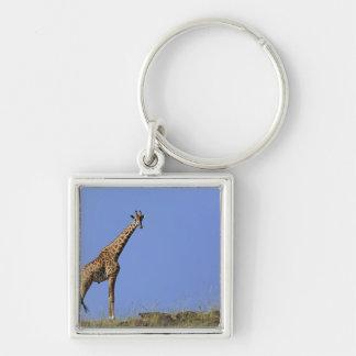 Giraffe, on ridge against blue sky, Giraffa Silver-Colored Square Key Ring