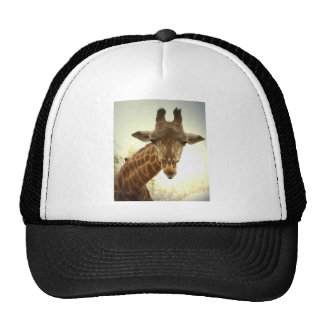 Giraffe orig -zaz hats
