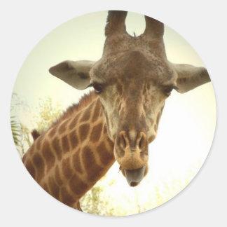 Giraffe orig -zaz classic round sticker