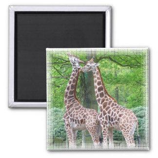 Giraffe Pair Square Magnet