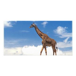 Giraffe Photo Cards