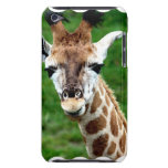 Giraffe Photo iTouch Case Barely There iPod Case