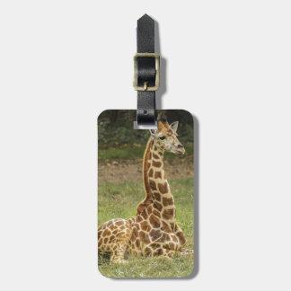Giraffe Photo Luggage Tag