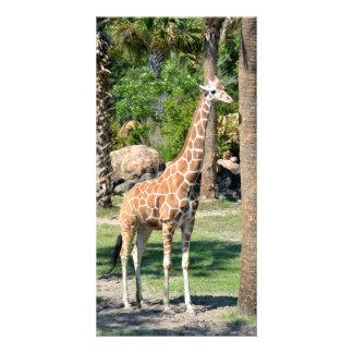 Giraffe photocard photo cards