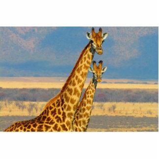Giraffe Standing Photo Sculpture