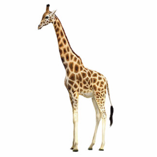 Giraffe Pin Photo Sculpture Badge