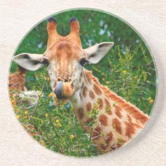Giraffe Portrait, Kruger National Park Drink Coaster