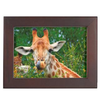 Giraffe Portrait, Kruger National Park Keepsake Box