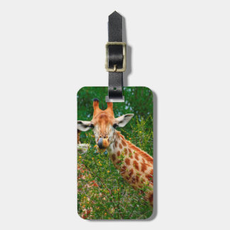 Giraffe Portrait, Kruger National Park Tags For Luggage