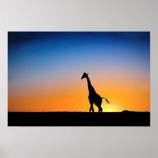 Giraffe Poster FROM 14 95
