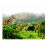 giraffe postkarte