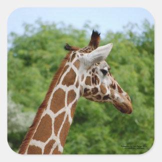 Giraffe profile. square sticker