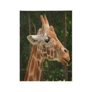 Giraffe Right Face Wood Poster