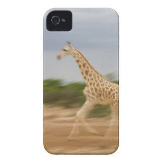 Giraffe running, side view (blurred motion) Case-Mate iPhone 4 cases