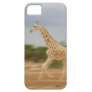 Giraffe running, side view (blurred motion) iPhone 5 covers