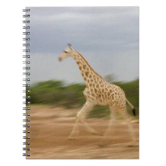 Giraffe running, side view (blurred motion) notebook