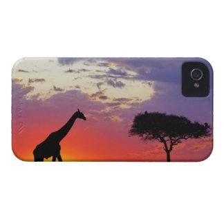 Giraffe silhouetted at sunrise, Giraffa iPhone 4 Cases