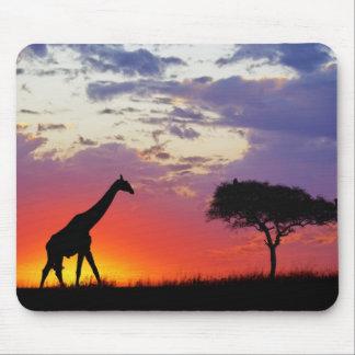 Giraffe silhouetted at sunrise, Giraffa Mouse Mat