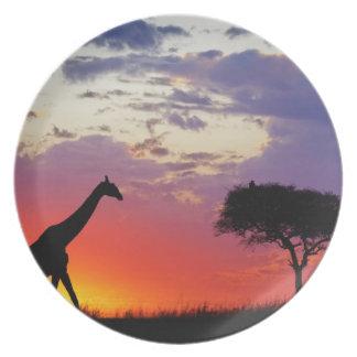 Giraffe silhouetted at sunrise, Giraffa Plate