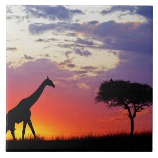Giraffe silhouetted at sunrise, Giraffa Tile