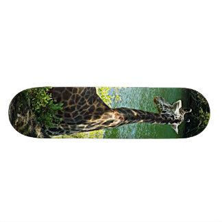 Giraffe Sitting Under a Tree Photo Kansas City Zoo Skateboard Deck