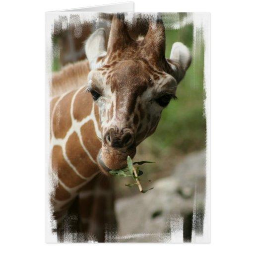 Giraffe Snack Greeting Card