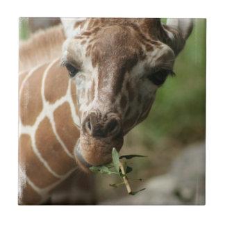 Giraffe Snack Tile