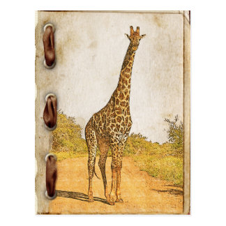 Giraffe, South Africa Postcard
