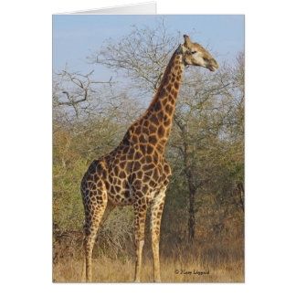 Giraffe Standing Tall Card