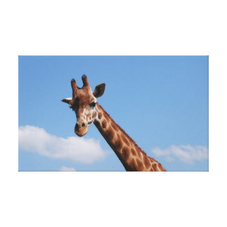 Giraffe Stretched Canvas Prints
