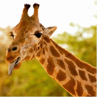 Giraffe Tongue Photo Sculpture Decoration