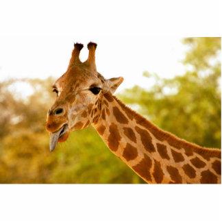 Giraffe Tongue Standing Photo Sculpture