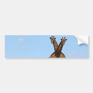 Giraffe Twins  Bumper Sticker