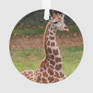 Giraffe Wildlife Animal Photo