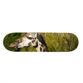Giraffe with Tongue Sticking Out Curled Up Skate Boards