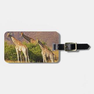 Giraffes 1B Luggage Tags