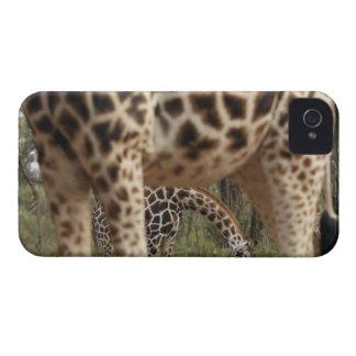 Giraffes 2 iPhone 4 Case-Mate cases