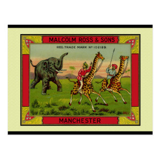 Giraffes and Elephant Post Card