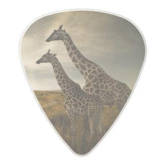 Giraffes and The Landscape Acetal Guitar Pick