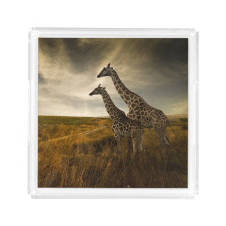 Giraffes and The Landscape Acrylic Tray