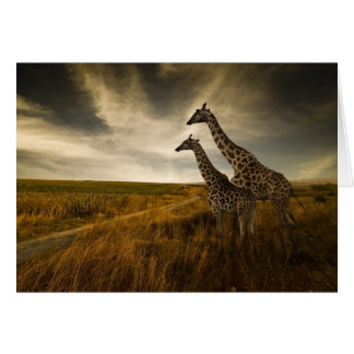 Giraffes and The Landscape Card